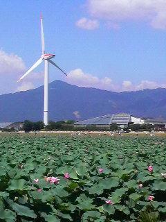 琵琶湖博物館と蓮