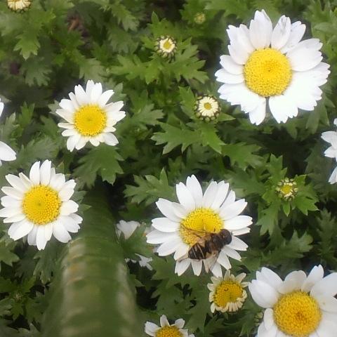 お花見にいきました